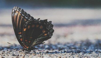Os dentistas-empreendedores e a lição da borboleta